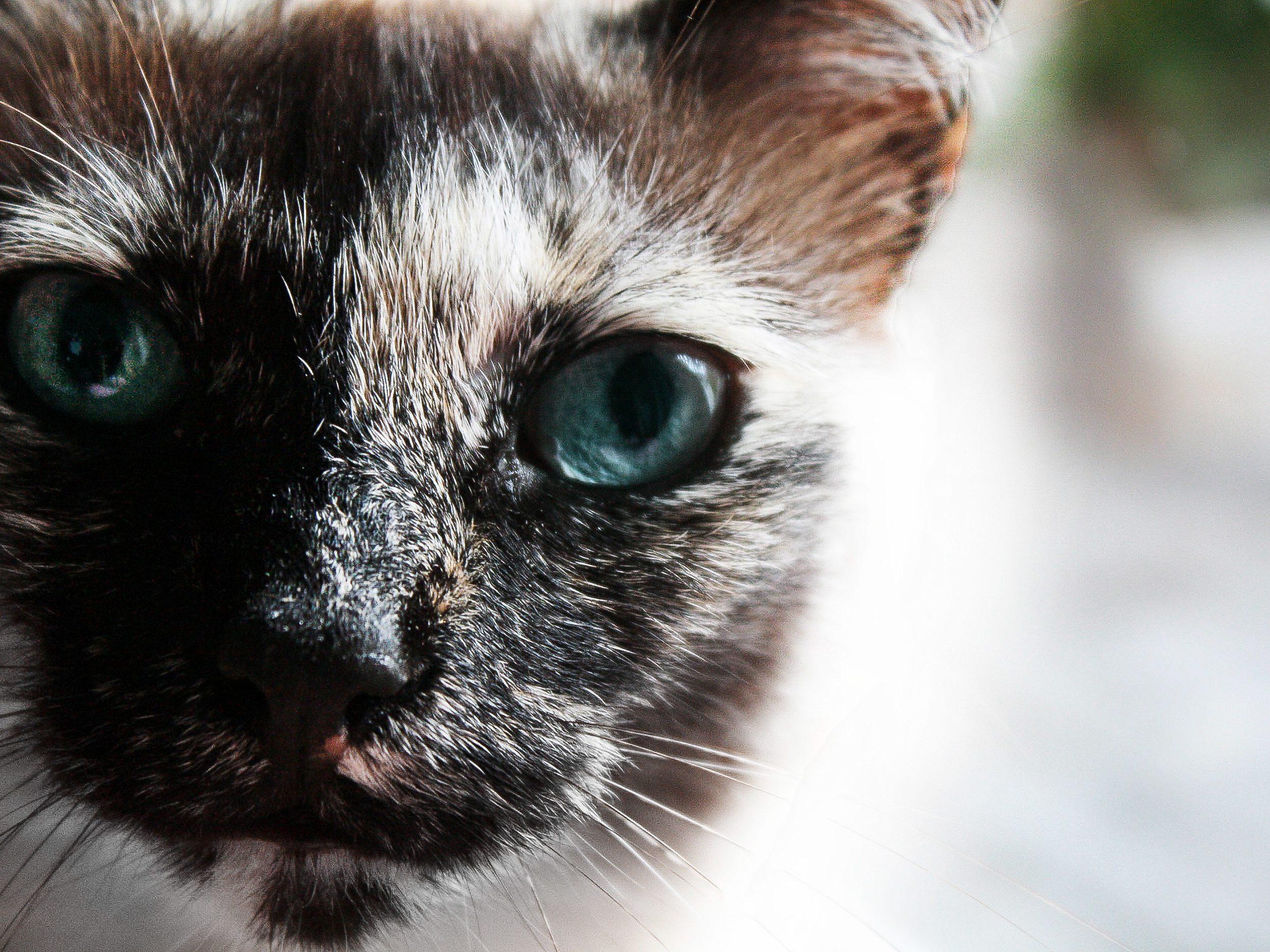 Cat close up photography