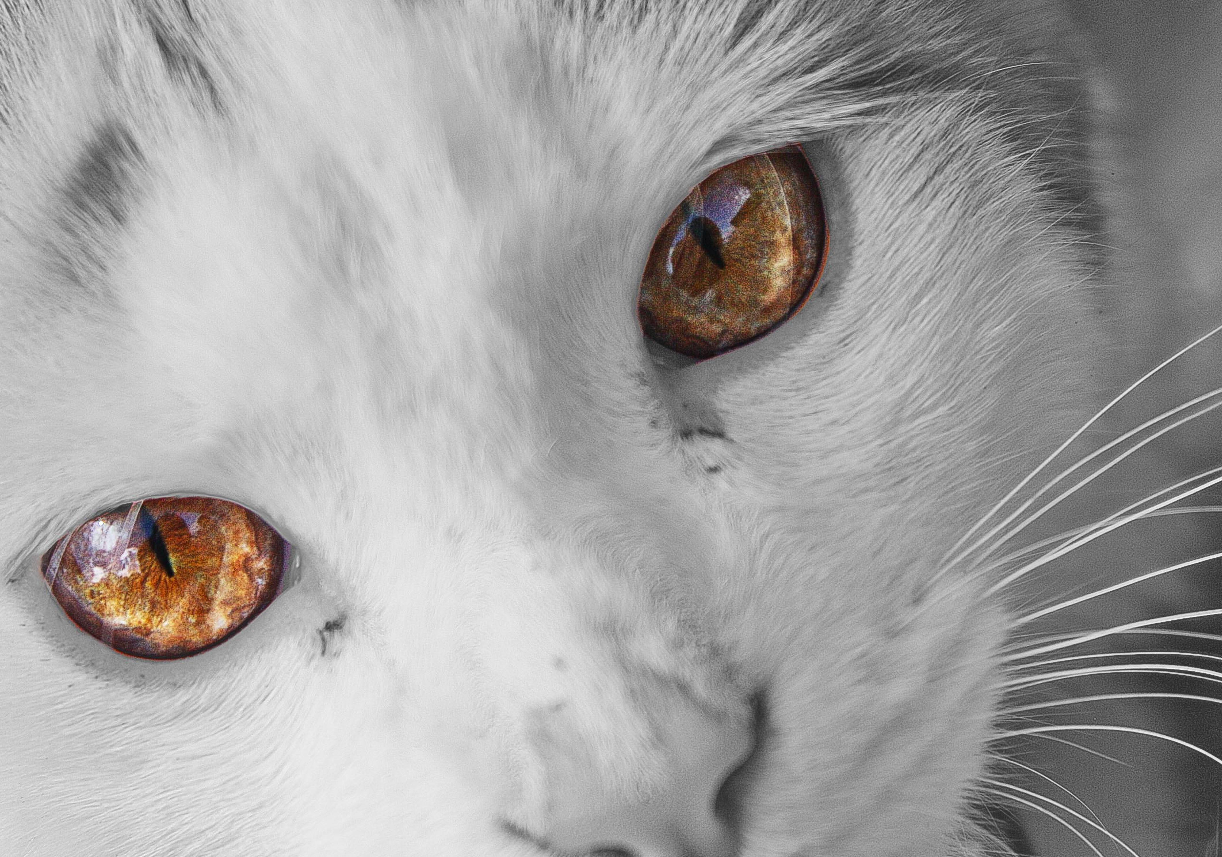 Cat Shot